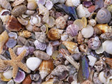 Mixed Sea Shells on Beach  Sarasata  Florida  USA