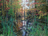 Autumn Scene in Woodland with Stream  Wisconsin  USA