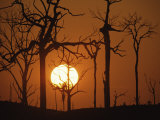 Sunset in Tropical Rainforest after Destruction by Fire  Brazil