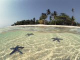 Three Seastars in Shallow Coastal Waters  Philippines  Split- Level Shot