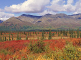 Tundra Landscape in Autumn  Denali National Park  Alaska USA