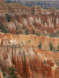 Hoodoo Sandstone Structures  Bryce Canyon National Park  Utah  USA