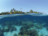 Split-Level Shot of Coral Reef and Shore  Phillippines