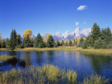 Snake River and Autumn Woodland  with Grand Tetons Behind  Grand Teton National Park  Wyoming  USA