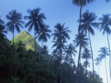 Palm Trees with Petit Piton Peak Behind  St Lucia  West Indies