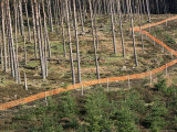 Deer Fence Protects Tree Plantation  Red Tape Reduces Grouse Collision  Highlands Scotland