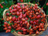Dog Rose Hips in Basket (Rosa Canina) Europe