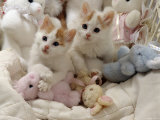 Domestic Cat  Two Turkish Van Kittens with Soft Toys in Crib