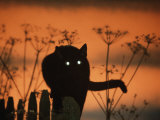 Black Domestic Cat Silhouetted Against Sunset Sky  Eyes Reflecting the Light  UK