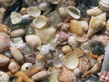 Sea Shells on the Sea Shore  Florida  USA