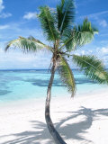 Beach with Coconut Palm (Cocos Nucifera) La Digue  Seychelles