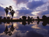 Palm Trees Silhouetted by Water at Sunset  Texas  USA