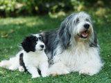 Polish Lowland Sheepdog with Puppy