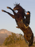 Horsewoman on Rearing Bay Azteca Stallion (Half Andalusian Half Quarter Horse) Ojai  California