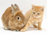 Ginger Kitten with Paw Extended and Sandy Lop Rabbit