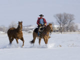 Cowboy Riding Red Dun Quarter Horse Gelding Through Snow  Bethoud  Colorado  USA