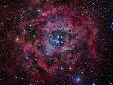 The Rosette Nebula