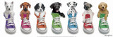 Sneaker Pup Line-Up