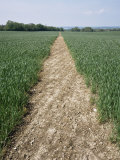 Pathway Through Field  Essex  United Kingdom