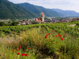 Weissenkirchen Pfarrkirche and Vineyards  Wachau  Lower Austria  Austria