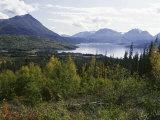 Northern Coniferous Forest Around Lake Skilak on the Kenai Peninsula  Alaska  USA