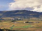 Vineyards Near Beaujeu  Beaujolais-Rhone Wine Area  Rhone Alpes  France