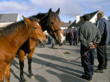 Horse and Foal Fair  Town of Wesport  County Mayo  Connacht  Eire (Ireland)