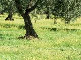 Landscape Near Trujillo  Caceres  Extremadura  Spain