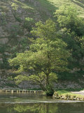 Dovedale (Dove Dale)  Derbyshire  England  United Kingdom