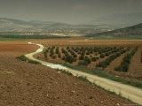 Landscape Near Jaen  Andalucia  Spain