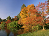 Acer Trees in Autumn  Sheffield Park  Sussex  England  United Kingdom
