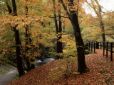 Breezy Autumn Day by the River Brathay Footbridge  Skelwith Bridge  Cumbria  England