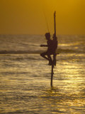 Stilt Fisherman (Pole Fisherman)  Sri Lanka