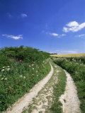 Curved Path Through Countryside  Old Winchester Hill  Hampshire  England  United Kingdom