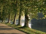Plane Trees Beside the River Saone Near Macon  Saone Et Loire  Burgundy  France