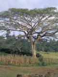 Oromo Country  Bako Region  Shoa State  Ethiopia  Africa
