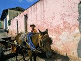 Horse-Drawn Cart in Street of the Colonial City  Trinidad  Sancti Spiritus Region  Cuba