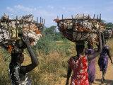 Nuer Women Carrying Sorghum  Gambella Region  Ilubador State  Ethiopia  Africa