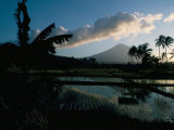 Reflections in Water of Rice Paddies  Amed Village  Island of Bali  Indonesia  Southeast Asia