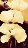 Yellow Poppies III