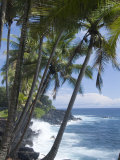 Puna (Black Sand) Beach  Island of Hawaii (Big Island)  Hawaii  USA
