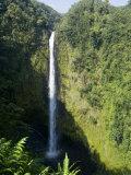 Akaka Falls  the Island of Hawaii (Big Island)  Hawaii  USA