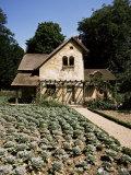 Hameau De Trianon  Palace Grounds  Versailles  Ile De France  France