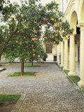 Orange Tree in Courtyard  Cordoba  Andalucia  Spain