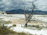 Mammoth Hot Springs  Yellowstone National Park  Unesco World Heritage Site  Wyoming  USA
