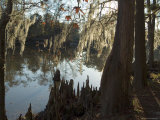 Sam Houston Jones State Park  Lake Charles  Louisiana  USA