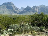 Big Bend National Park  Texas  USA