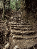 Steps on the Inca Trail  Peru  South America