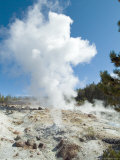 Norris Geysers  Yellowstone National Park  Unesco World Heritage Site  Wyoming  USA