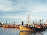 Fishing Fleet in Port  Mar Del Plata  Argentina  South America